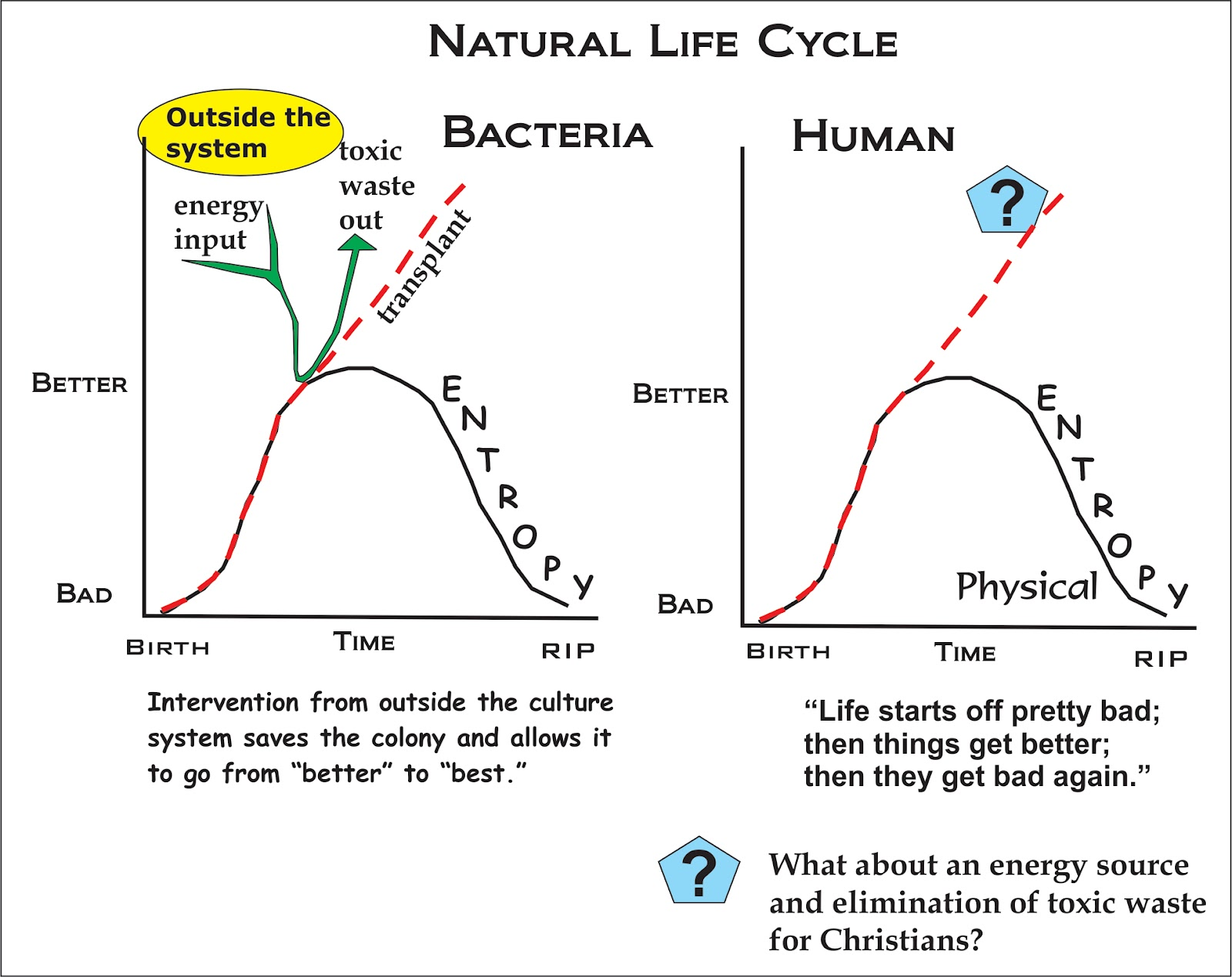 Life cycle of a human