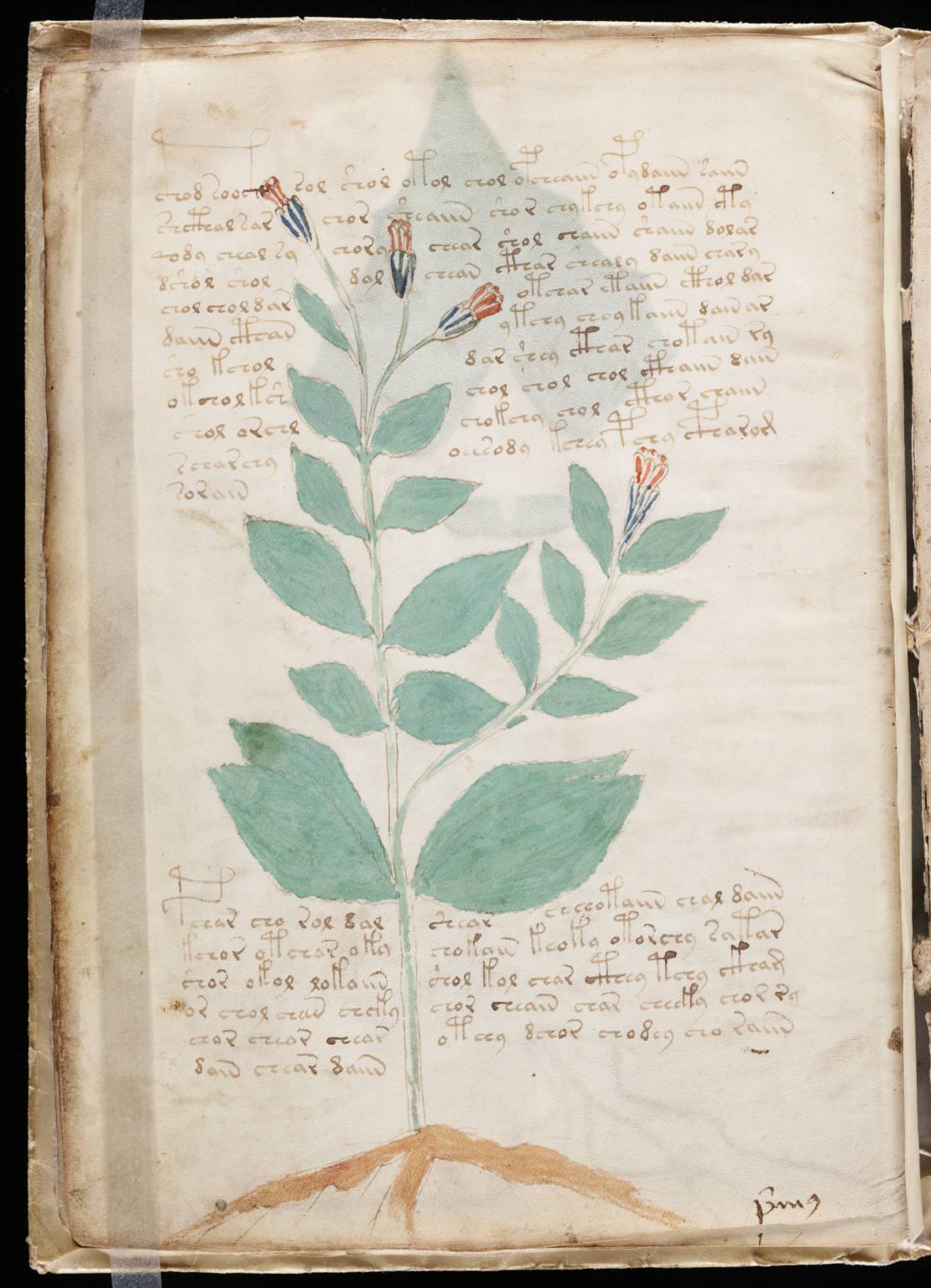 manuscrito018