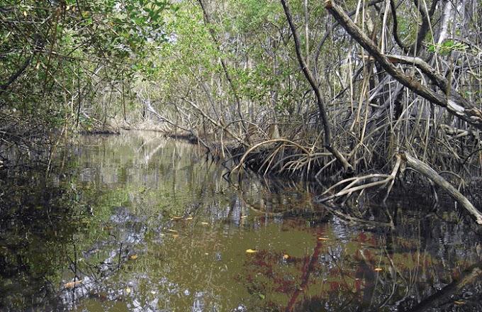Entenda o impasse entre as leis federal e municipais sobre Áreas de Preservação Permanente
