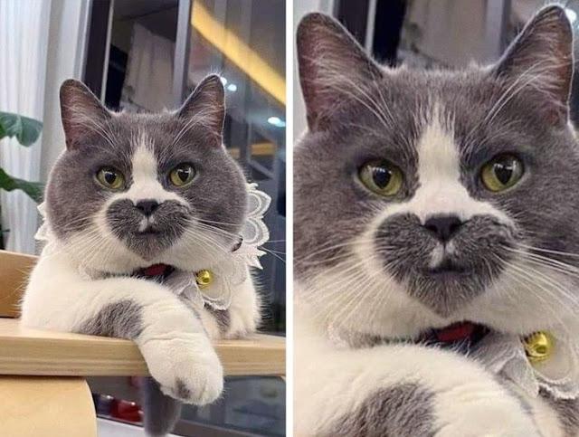 Топ-10 фотографий с кошками, которые раскрашенные природой не по правилам