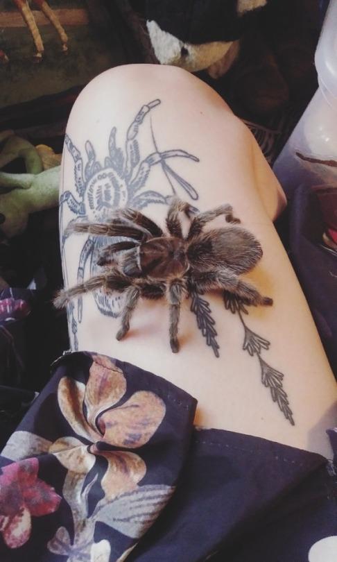 Foto de una tarántula en la pierna de una joven tatuada con una tarántula
