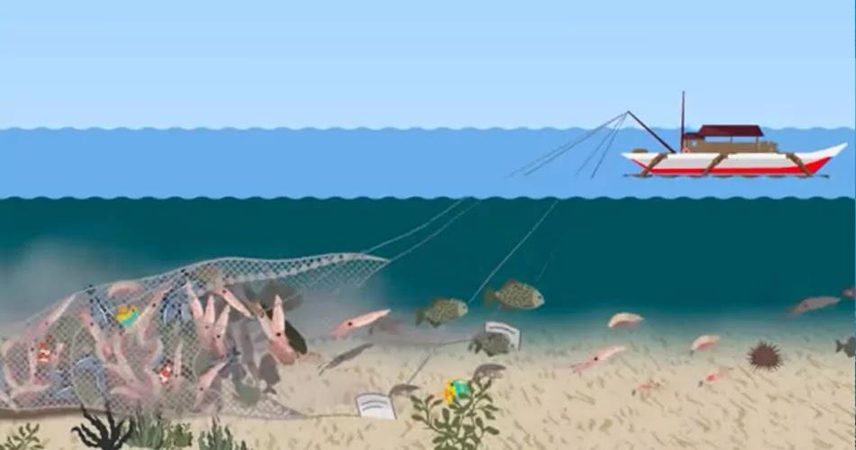 Bottom Trawling method, technique