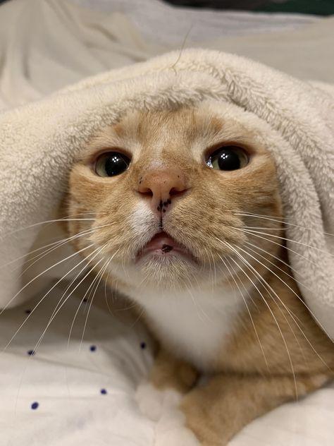 ảnh mèo làm hình nền điện thoại