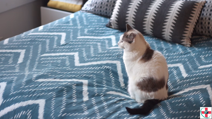 Does keeping a cat actually affect your pregnancy? Find Out!