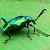 10 حيوانات غريبة تفصح عن عجائب الطبيعة