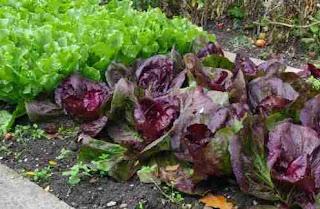 Κάντε εναλλαγή καλλιεργειών