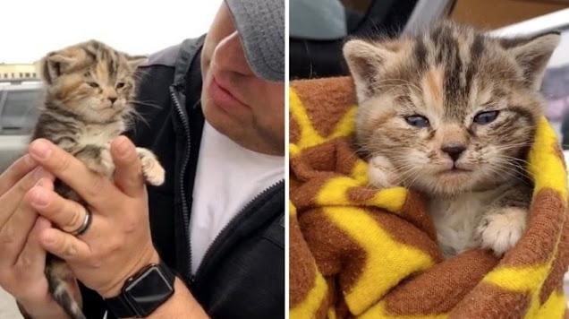 3-недельный котёнок бродил по городу совсем один, пока не попался на глаза неравнодушному прохожему