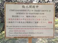 Plum tree grove (ume) now open - Hama-Rikyu Garden, Tokyo, Japan