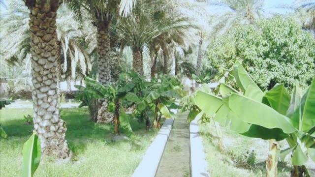 الأفلاج في سلطنة عمان الأفلاج في سلطنة عمان