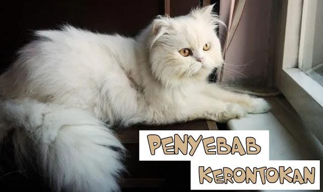 Harga Obat Bulu Kucing Rontok