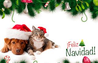 Tarjeta de Navidad de Perros y Gatos
