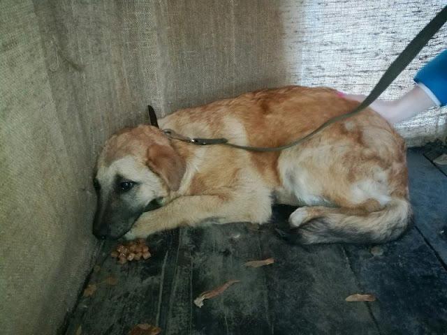 Больше пол года щенок прятался от девушки,которая хотела спасти его