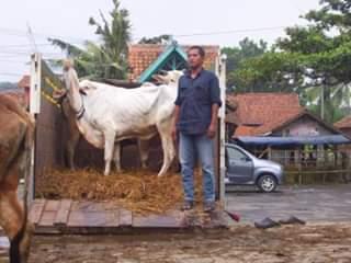 penanganan setelah perjalanan pengiriman ternak yang baik
