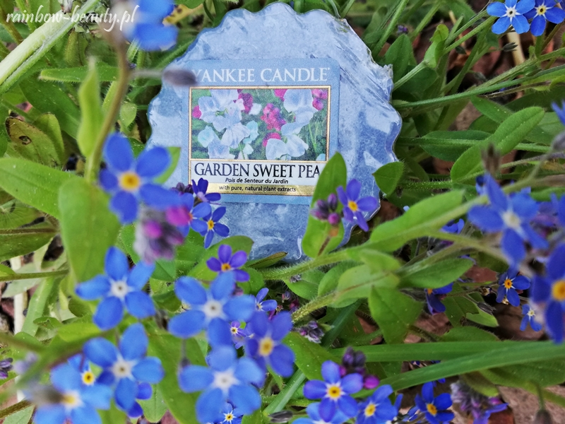 garden-sweet-pea-yankee-candle-wosk-opinie-zapach