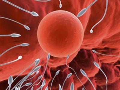 Thuốc tăng chất lượng tinh trùng nào tốt?