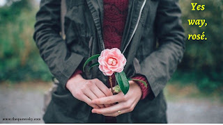 351+ Rose Captions For Instagram [ 2021 ] Also Rose picture
