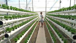 The Innovative way of farming at Home : Hydroponic Farming