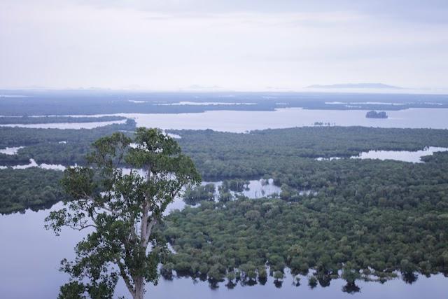 Danau Sentarum : Danau Langka dan Unik di Jantung Borneo (Part I)
