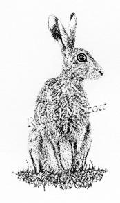 Hare stipple illustration by Rachel M Scott