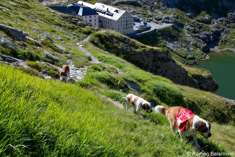 Hikes on the Pass with the Saint Bernards Things to Do Martigny Switzerland