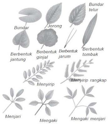 Beraneka ragam bentuk tepi daun