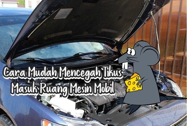 cara cegah tikus masuk mobil