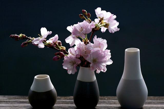 bunga sakura cantik banget