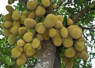 http://tipspetani.blogspot.com/2017/04/cara-pembibitan-dan-perawatan-pohon.html