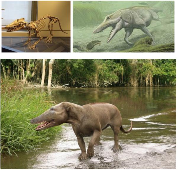 Pakicetus là tổ tiên sống trên cạn của loài cá voi ngày nay