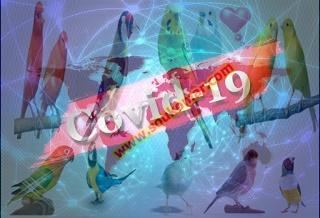 فيروس كورونا COVID-19