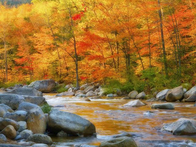 Resultado de imagem para o rio passa ao lado de uma árvore