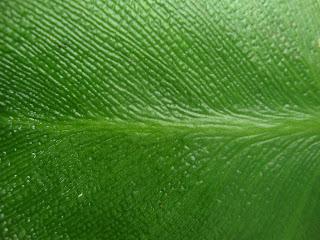 Green Leaf (Fingerprints) photo (c) 2012 by Maja Trochimczyk