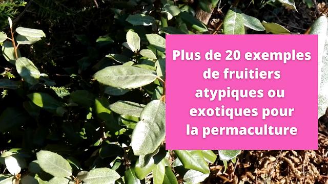 Plus de 20 exemples de fruitiers atypiques ou exotiques pour la permaculture (vidéo)