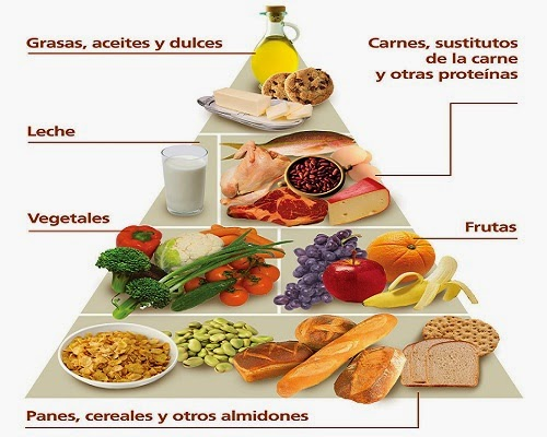 Preferência PasandoDato: La Alimentación: Componentes, Nutrientes y Requerimientos RL91