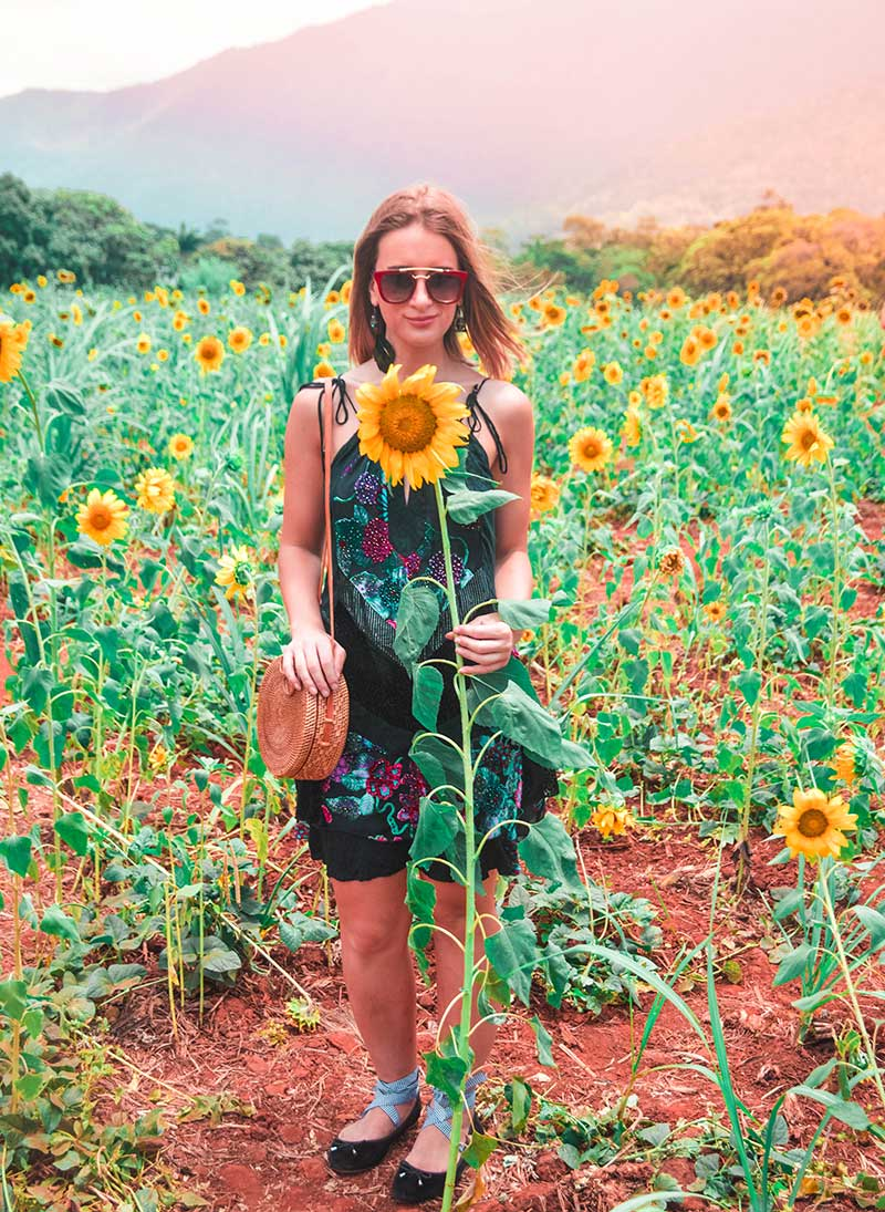 sunflower field cairns photoshoot floral velvet dress rattan basket bag blogger style the daily luxe