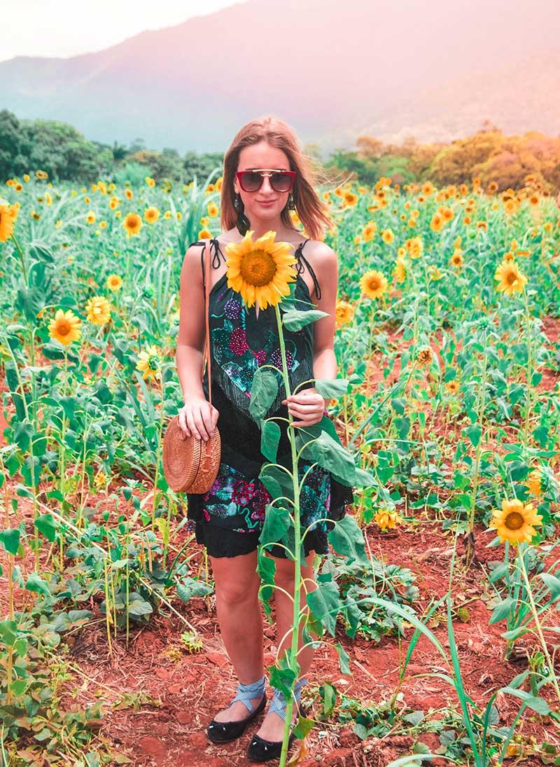 sunflower field cairns photoshoot floral velvet dress rattan basket bag blogger style the daily luxe