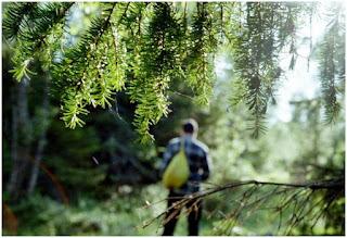 Советы МЧС как не заблудиться в лесу