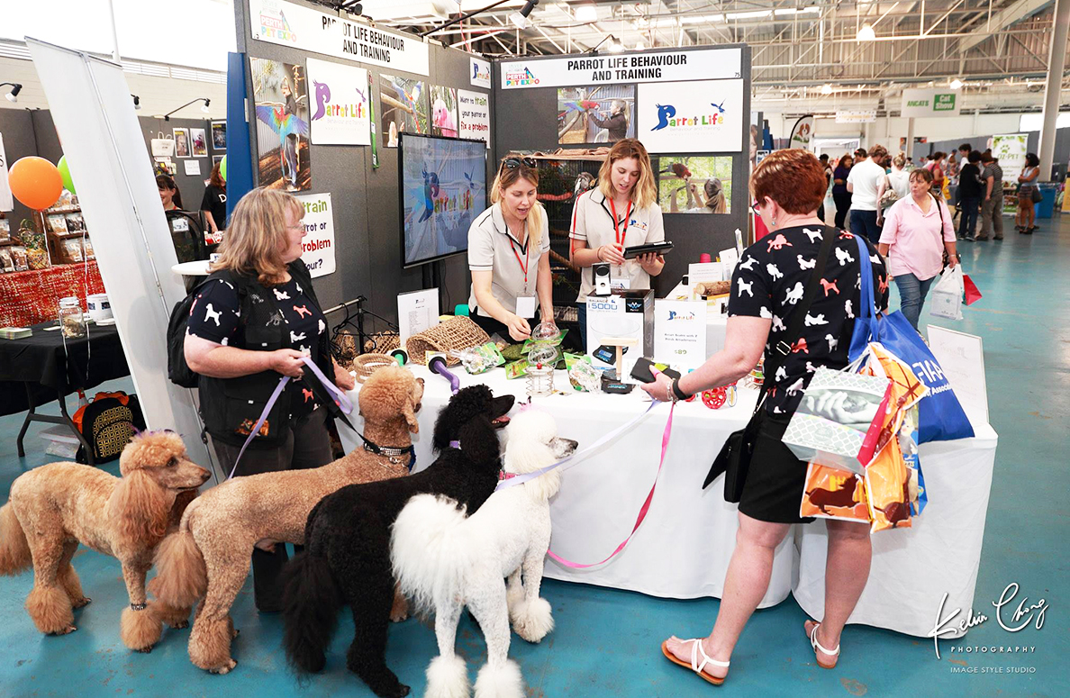 Four groomed Poodles visit a stall at the Perth Pet Animal Expo