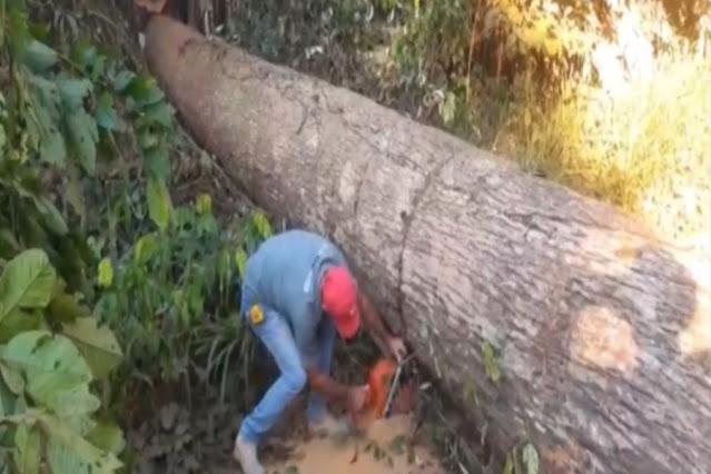 Mais de 60 famílias são retiradas de área ao redor do parque estadual Guajará-Mirim, RO