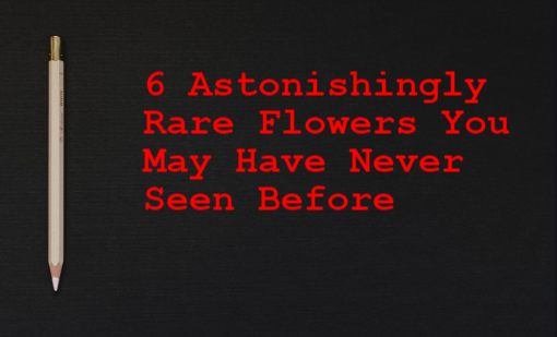 6 Astonishingly Rare Flowers You May Have Never Seen Before