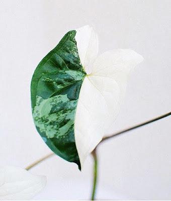 Liście roślin doniczkowych