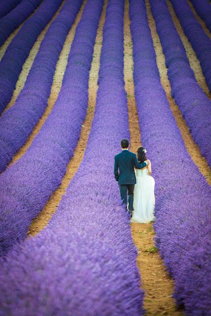 Coppia di sposi in un campo di lavanda a Valensole-Provenza