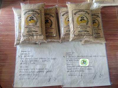Benih Padi Pesanan   JHONNY Deliserdang, Sumut.    (Sebelum di Packing).