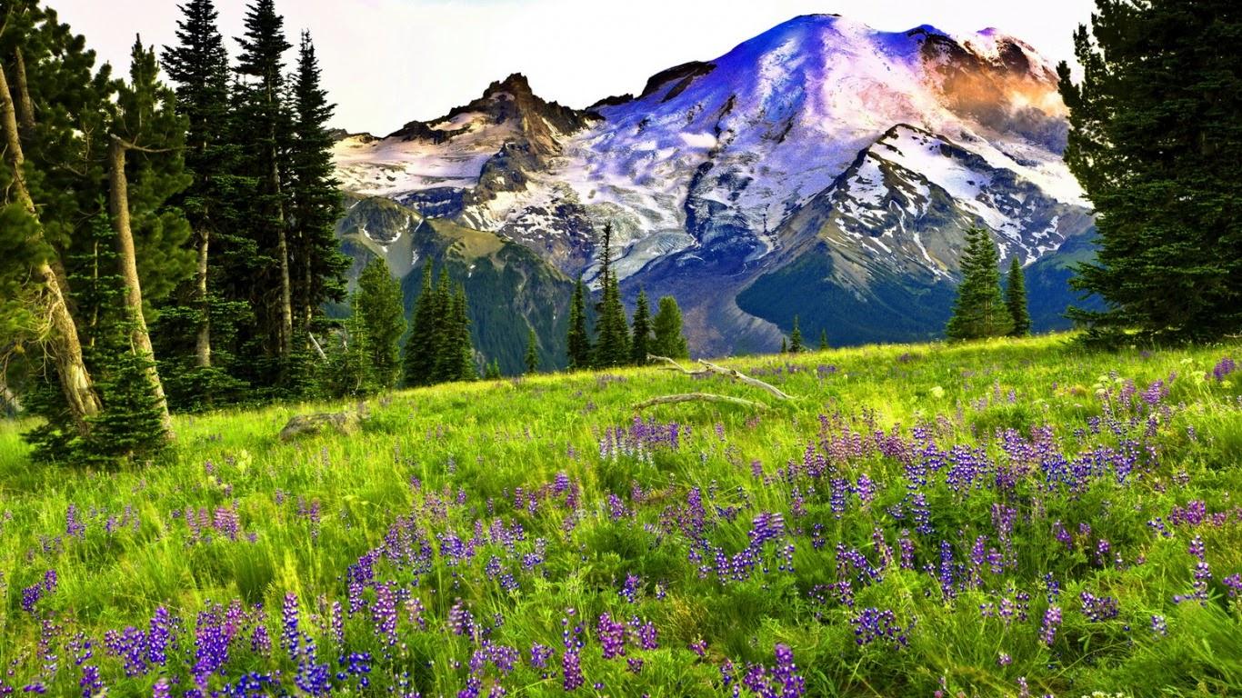 Meilleurs fonds d 39 crans paysages et fleurs fond ecran pc for Fond decran telephone