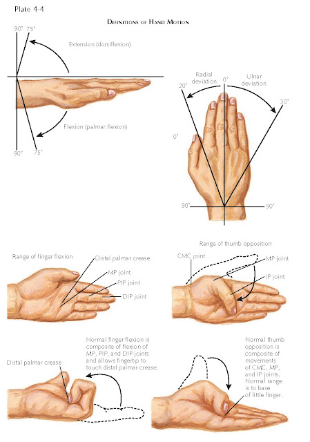 MOVEMENT OF THE HAND