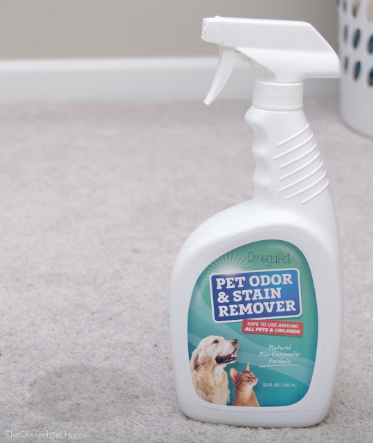 Pet Carpet Cleaner to clean stains
