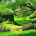 प्राकृतिक तस्वीरें आपको घर बैठे ही प्रकृति की गोद  में बैठने  पर मजबूर कर देगी