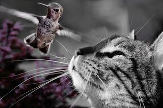 Hal yang Kucing Suka
