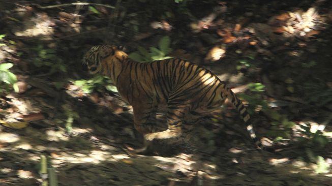 Miris! Demi Bisa Wujudkan Belajar Online, Pelajar di Tapsel Harus Lewati Jalur Harimau