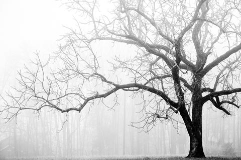 Dormant deciduous tree in winter